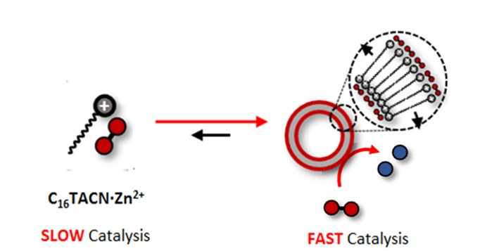 Substrate-induced catalyst 1