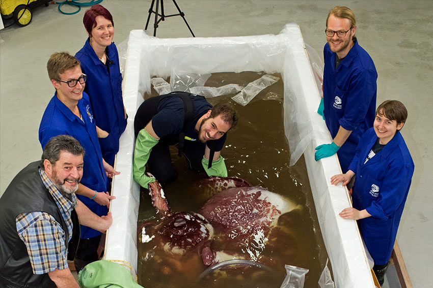 ALCES lab members examining a colossal squid