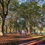 Walking trail at Cornwall Park, Auckland