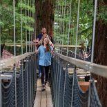 Redwoods Treewalk, Whakarewarewa, Rotorua