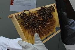 Biodiversity Bees