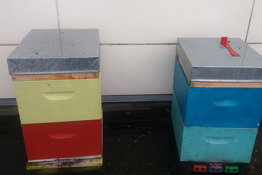 Beehives at AUT