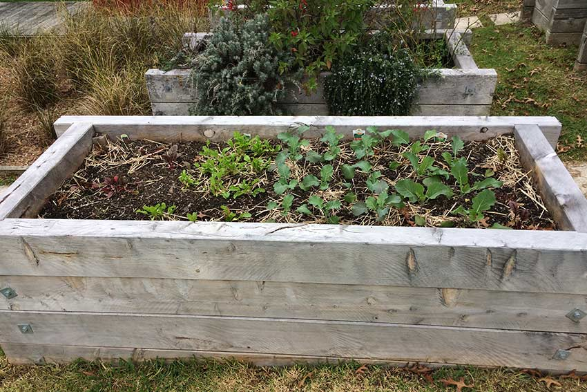a-planter-box-at-aut